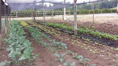 farm life 563