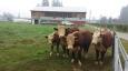 farm life 654